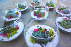 Succulent. Air Plant. Cactus - Wedding favour, Party favour,Gift