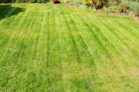Grass cutting/Lawn mowing & Garden maintenance