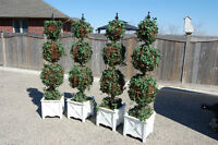4 - 6ft Topiary Trees