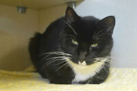 Shadow-Oromocto and Area SPCA