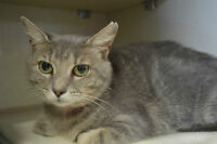 Tizzy-Oromocto and Area SPCA