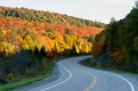 Algonquin Fall colours from Toronto Sept 23rd