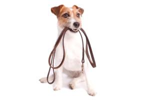 Dog walker and dog sitter