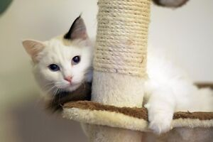 *NEW* Cat ONLY Boarding Center In South Edmonton!