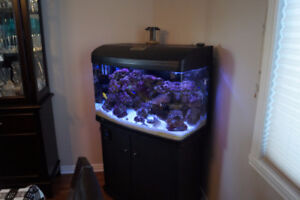 48 Gallon Salt Water Aquarium with Mated Clown Fish