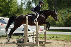 Pony large 12000 us