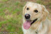SADIE is available for ADOPTION at the OSPCA RENFREW COUNTY!