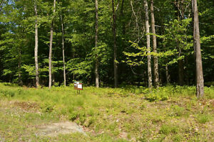 5 Acre Lots for Sale in Beautiful Brome Lake area of Townships West Island Greater Montréal image 5