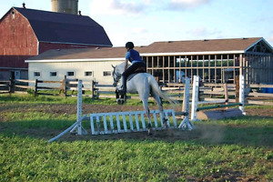Practically bombproof gelding for part board