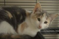 Kittens-Oromocto and Area SPCA