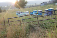 Wanted, small bee yard