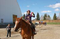 Reg. Quarter Horse mare