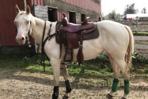 Registered 2015 Quarter Horse Mare For Sale