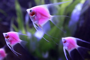 Looking for free unwanted fish & accessories in Fredericton Area