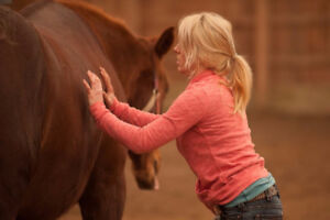 STASIS EQUINE MASSAGE THERAPY AND CONDITIONING