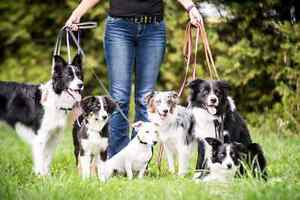 Adventure Dogs! Not your typical dog walking service!