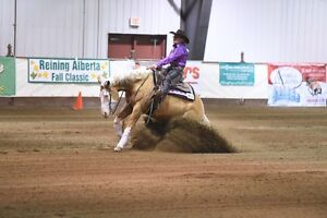 WANTED - Quarter Horse Trained in Reining or Cattle Penning