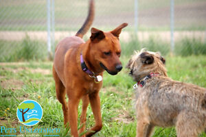 Dog Boarding with a difference at Pets Unleashed