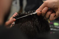 Barber Position In Toronto