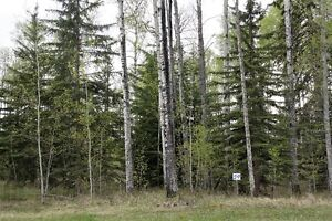 Fully treed 1 acre in pestigious community!
