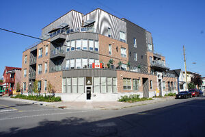 Beautiful Bright Sunny Bachelor Condo for Rent in Little Italy!