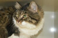 Olive-Oromocto and Area SPCA