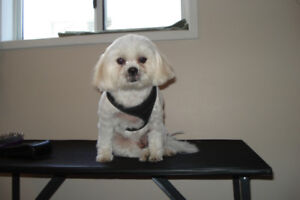 Small Dog Pet Grooming