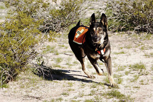 Canine Tracking & Scent Sports