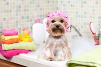 Experienced Pet Groomer Wanted