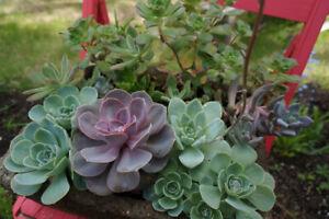PERENNIALS,  PLANTS AND SUCCULENTS