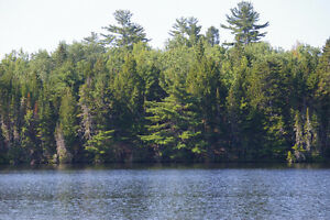 Beautiful waterfront lots on Mactaquac Arm