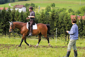 Riding and in hand lessons