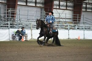 2013 Black AQHA Gelding by Shiners Q Chex (reining trained)