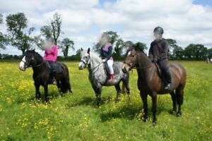 Looking to lease retired english riding horse