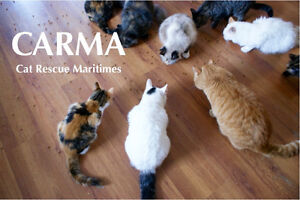 CARMA Amherst Cats Looking for Forever Homes