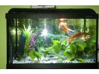 Sale full set up fish tank about 60-70 liter.All fish included.