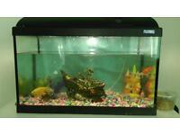 9 gold fish and tank