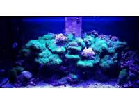 Marine aquarium fish tank aqua one aquareef 400 black