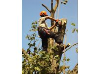 Allwood tree surgery 25 years experience