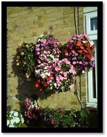 Fully planted hanging baskets in Kent