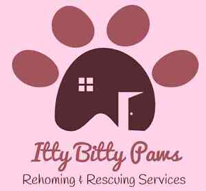 Small Animal Rehoming & Rescuing