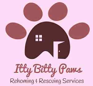 Small Animal Rehoming and Rescuing
