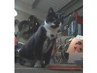 Black and White Adult Cat found on Saddlebow Industrial Estate