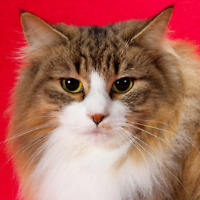 CAT SHOW KINGSTON OLYMPIC HARBOUR