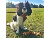 Experienced Dog Walker/Pet Sitter in Edinburgh