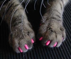 Soft Claws for Cats - $45 Kingsley Joondalup Area Preview