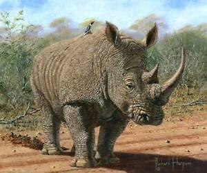 ORIGINAL-RICHARD-HARPUM-Kruger-White-Rhino-National-Park-South-Africa-PAINTING
