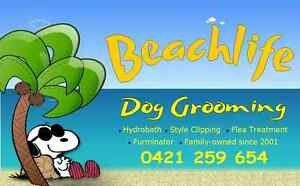 Beachlife Dog Grooming Nundah Brisbane North East Preview