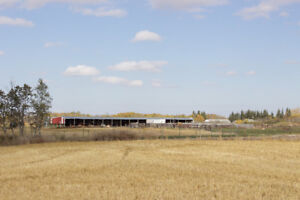 Farm with 160 acres in the RM of Prairie View (Birtle)