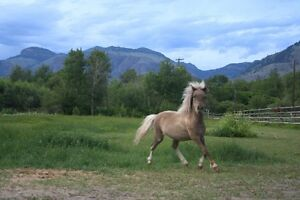 Registered Miniature Filly